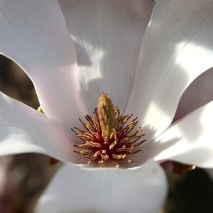 Magnoria-IMG_7148-002