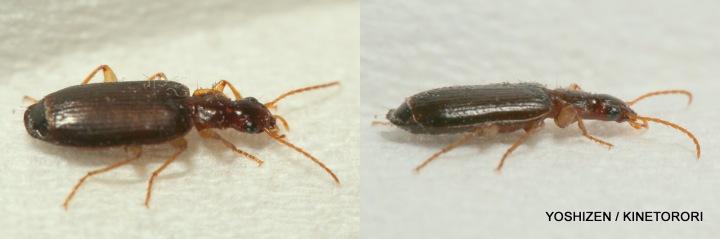 6mm Beetle,EF100mm, Proxer, 270EX Flash 417-001