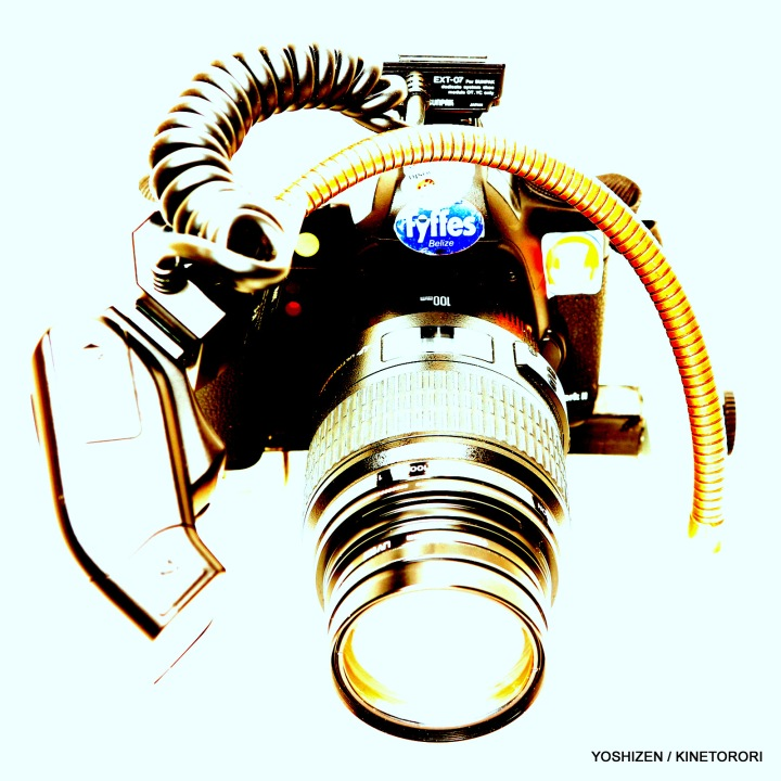 Macro flash-270EX(1)A09A0174