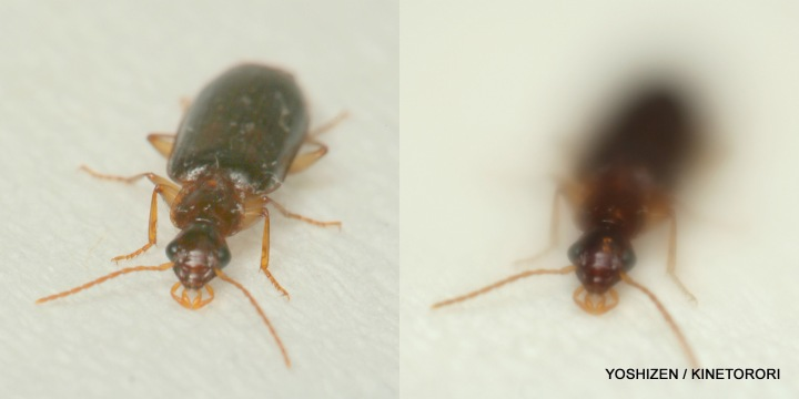 Small Beetle-416-001