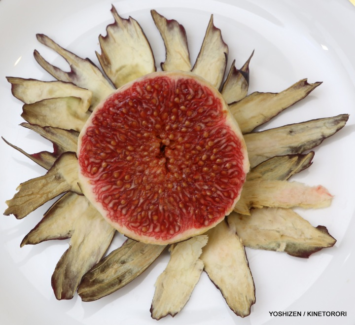 Ficus.Fictiosa var Brag-A09A1086
