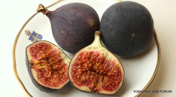 Figs-A09A1069