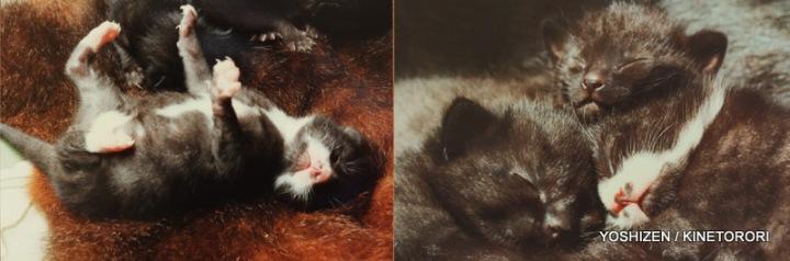 Cat's Moustache(1)464-001