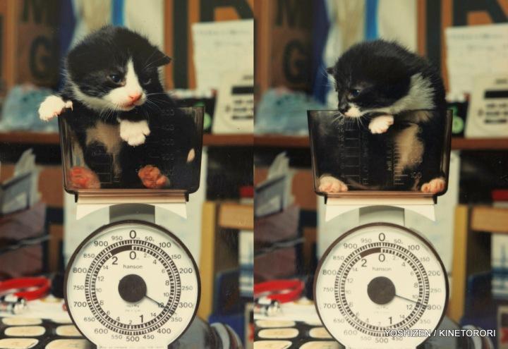 Cat's Story (B)473-002