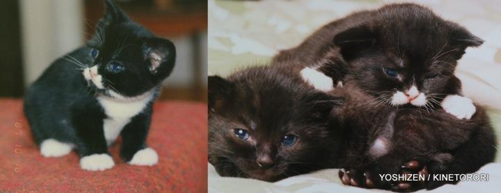 Cat's Story Haori (3)471-001