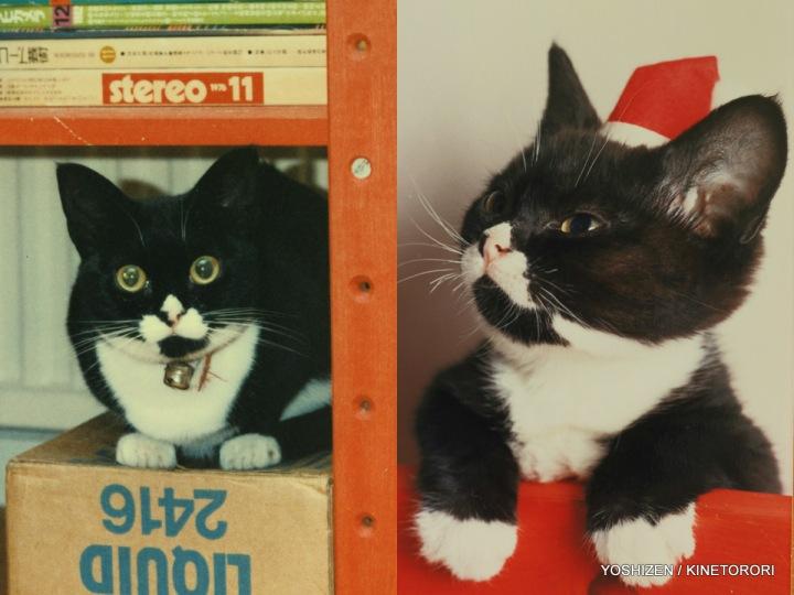 Cat's Story Haori (4)472-001