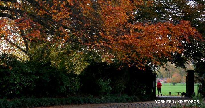 Autumn Color-II-(11)A09A1591