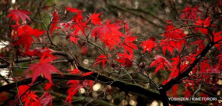 Autumn Color-II-(1)A09A1547