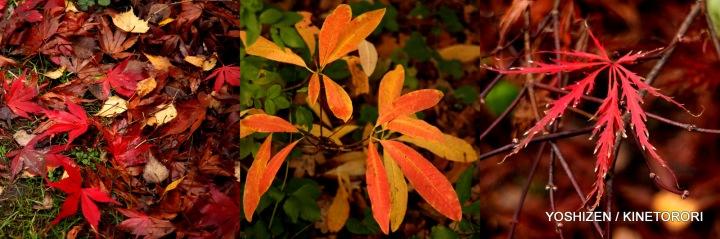Autumn Color-II-(2)495-001