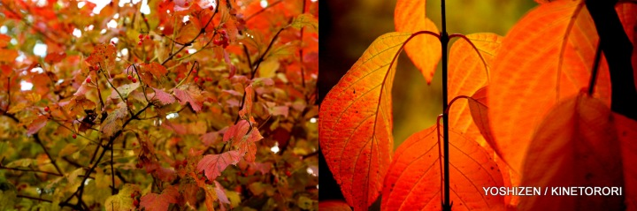 Autumn Color-II-(4)494-001