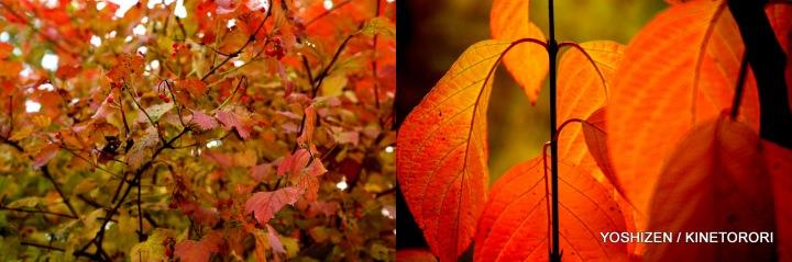 Autumn Color-II-(4)494-001