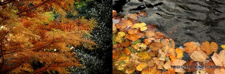 Autumn Color-II-(6)493-001