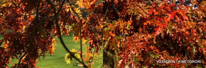 Autumn Color-II-(9)497-001