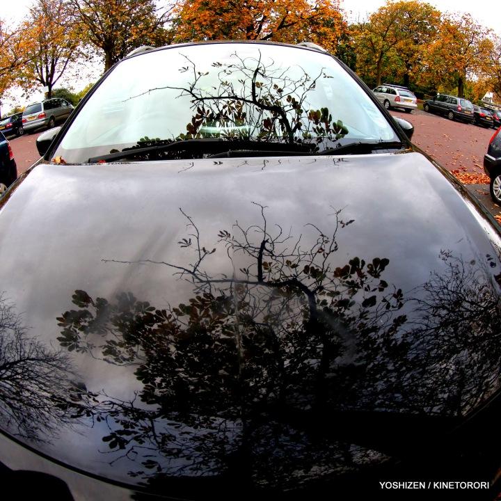 Autumn Color(3)A09A1320