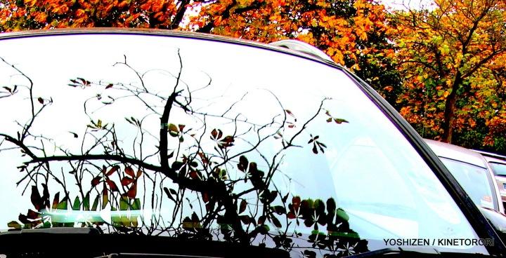 Autumn Color(3B)A09A1321-001