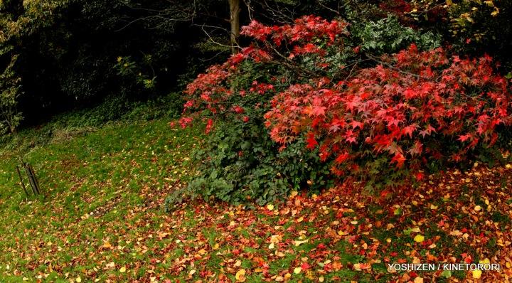 Autumn Color(4)A09A1328