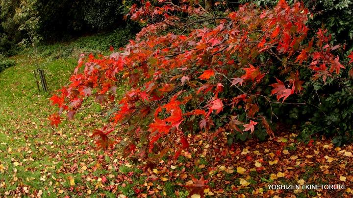 Autumn Color(5)A09A1327