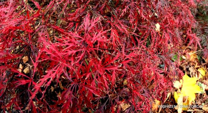 Autumn Color(6)A09A1322