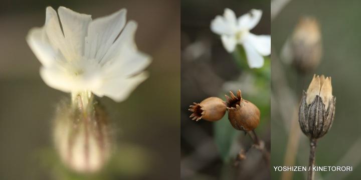 Last flowers-2013(4)487-001