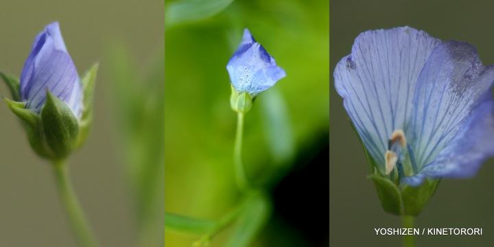 Last flowers-2013(5) 486-001