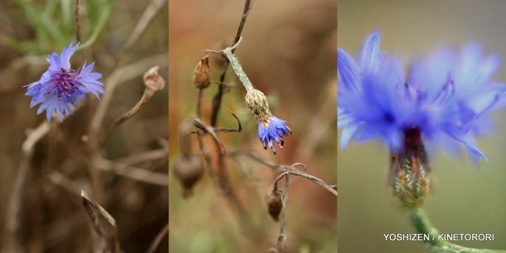 Last flowers-2013(7)492-001