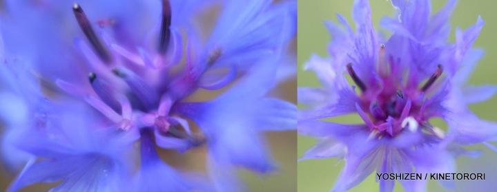 Last flowers-2013(8)491-001