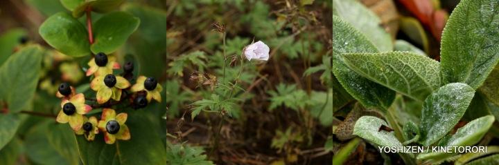 Last flowers-2013(9)490-001