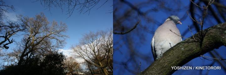 Grnwch Park(8)559-001