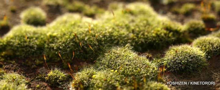 Moss(2)A09A3811