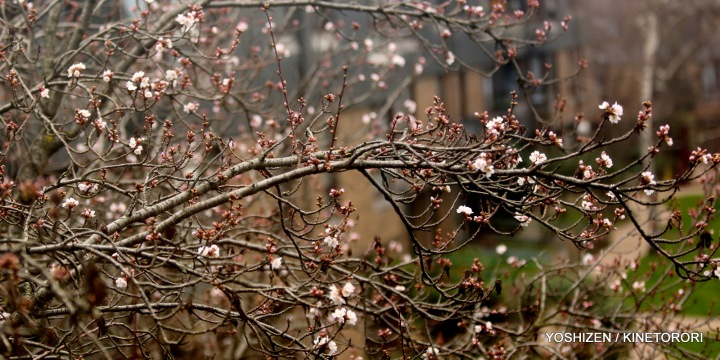 2-Early Spring(3)A09A4133