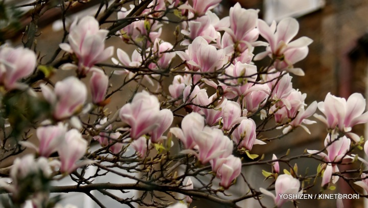 2-Early Spring(5)A09A4137