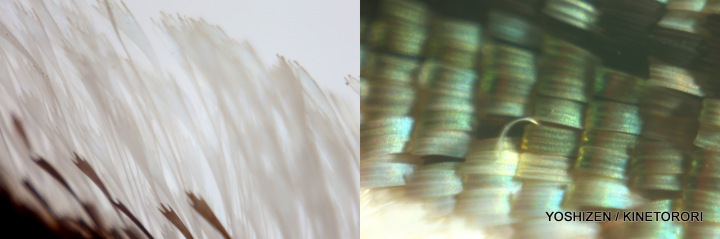 Lelegance Lens(6)24-001
