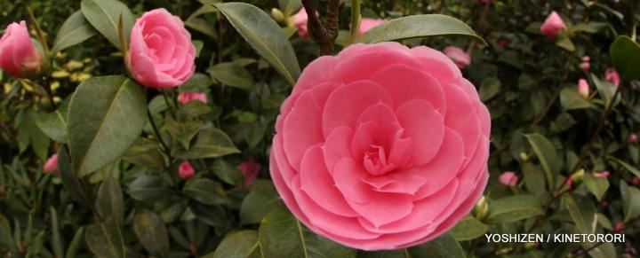 Pink Pink(10)A09A4860
