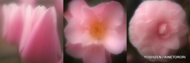 Pink Pink(2)21-001