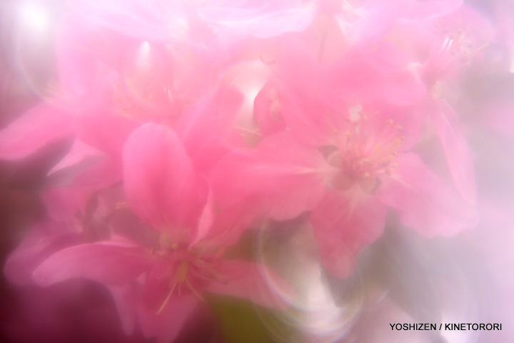Pink Pink(4)A09A4844