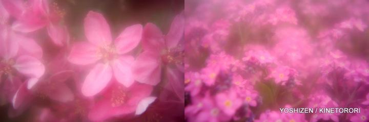Pink Pink(5)22-001