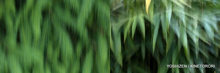 Karenisque Green(10)116-001