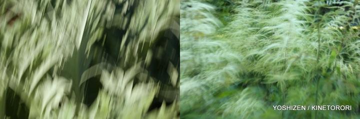 Karenisque Green(11)117-001