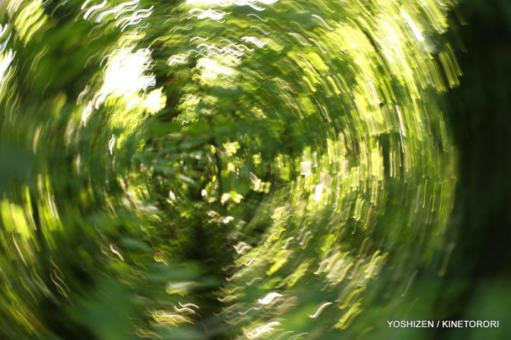 Karenisque Green(12)A09A0846