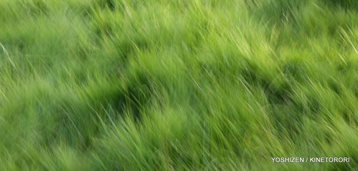 Karenisque Green(2)A09A0686