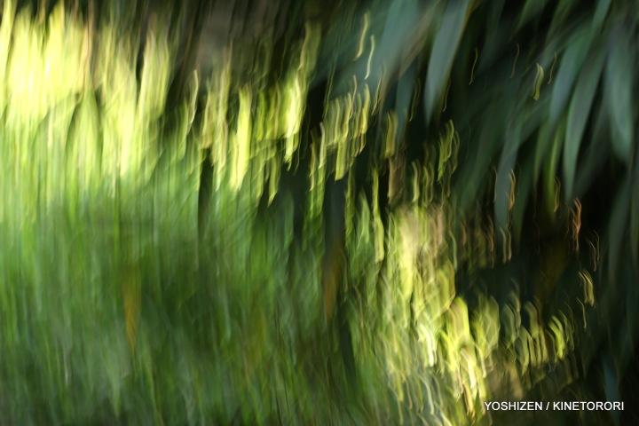 Karenisque Green(3)A09A0727