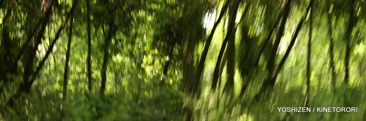 Karenisque Green(5)113-001