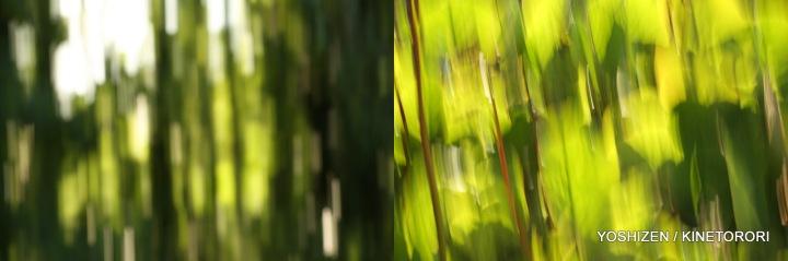 Karenisque Green(6)114-001