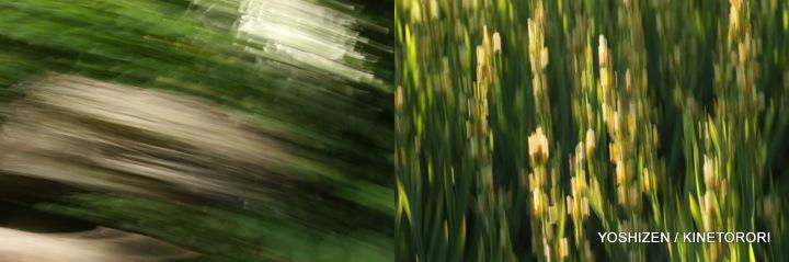 Karenisque Green(9)115-001