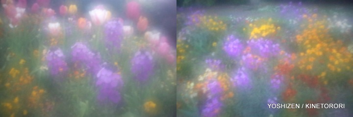 New-DD Pinhole Flower(3)64-001