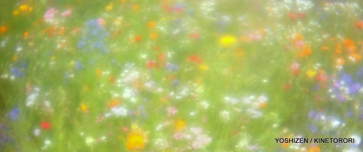 Instant Meadow2(14)A09A1685-001
