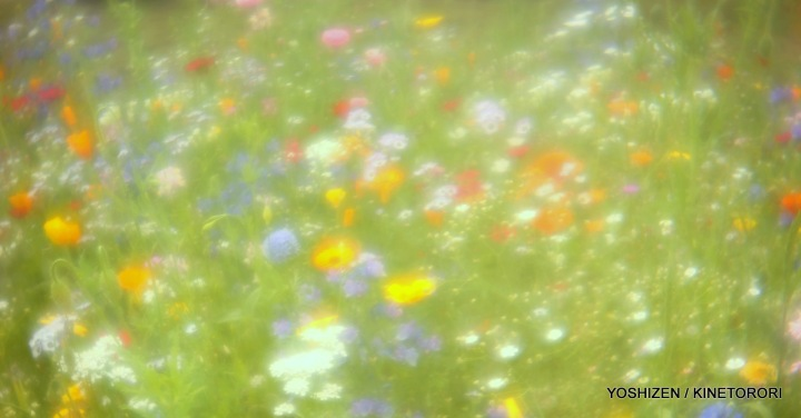 Instant Meadow2(1)A09A1667-002