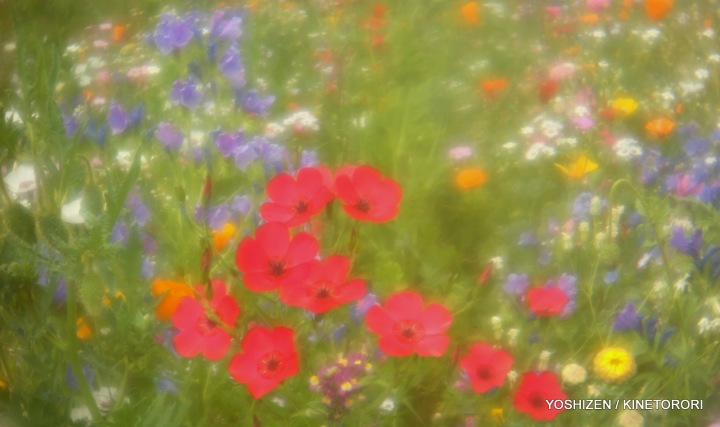 Instant Meadow2(8)A09A1663-002