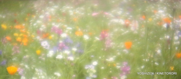 Instant Meadow(2)A09A1255