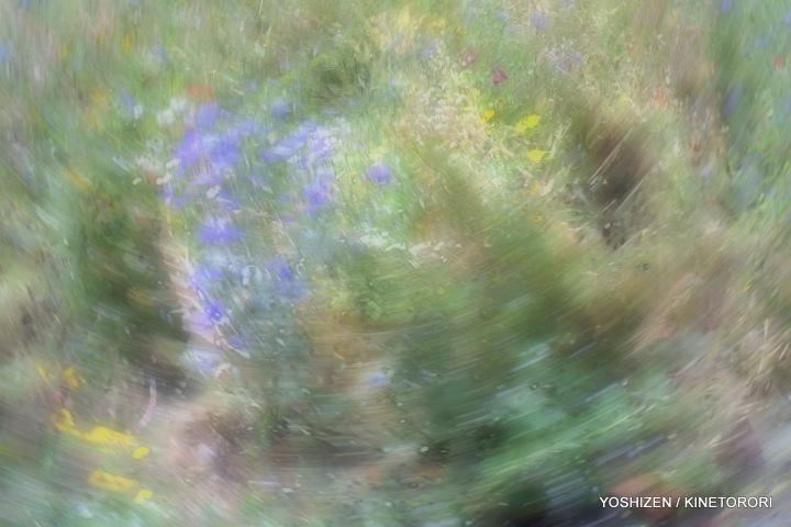 Karenisque Meadow-2(6)A09A2297